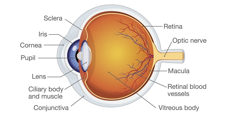 What is Ophthalmology? , Trend Health